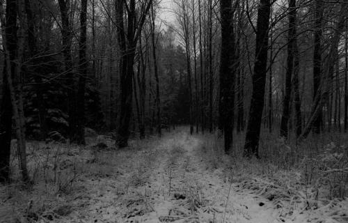 Omslag rörelser i skogen