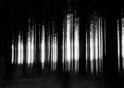 mörkskog utsmetad